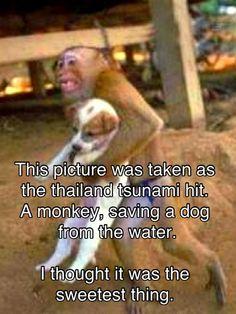 A monkey saving a pup!  Blows me away!!!