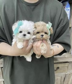 Teacup Puppies, Cute Puppies, Pandora Essence Collection, Dog Houses, Knitting Patterns Free, Puppy Love, Fur Babies, Teddy Bear, Pure Products