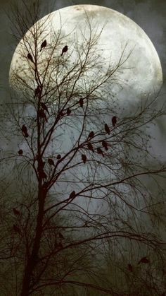 Black birds singing in the dead of night by John Rivera-such a beautiful moon Shoot The Moon, Moon Photography, Moonlight Photography, Photography Ideas, Moon Magic, Moon Art, Stars And Moon, Belle Photo, Night Skies