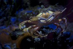 Mister crab, follow and like us here and on Facebook.com/creativemoments9