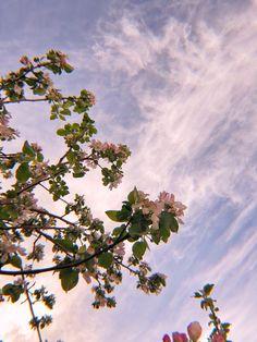 Spring Aesthetic, Nature Aesthetic, Flower Aesthetic, Aesthetic Photo, Aesthetic Pictures, Flor Iphone Wallpaper, Cute Wallpaper Backgrounds, Cute Wallpapers, Aesthetic Backgrounds