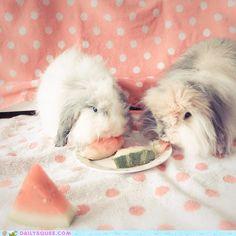 2 fluffy bunnies
