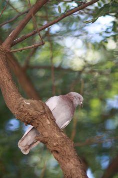 Kyyhkynen Barcelonassa Parrot, Bird, Nature, Animals, Sagrada Familia, Parrot Bird, Naturaleza, Animales, Animaux