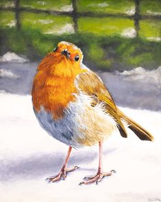 A Robin Came to Visit Low Res Bird Paintings, Small Paintings, Watercolor Paintings, Bird Drawings, Wet Felting, Pencil Art, Beautiful Landscapes, Painting & Drawing, Robin