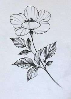Mini Tattoos, Rose Tattoos, Flower Tattoos, Body Art Tattoos, Art Floral, Floral Drawing, Stencils Tatuagem, Tattoo Stencils, Tatoo Flowers