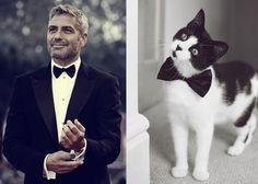 Male Celebrity vs. Cat (15)