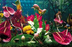 Marc Quinn, Gardens