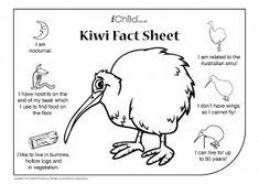 naturalists can find out about New Zealand's national bird. They can also enjoy colouring in their very own kiwi bird! White Bird Tattoos, Black Bird Tattoo, Butterfly Tattoos, Flower Tattoos, New Zealand Country, New Zealand Art, Bird Crafts Preschool, Craft Activities For Kids, Waitangi Day