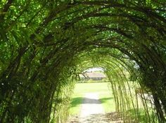 I'd love to grow one of these and then cover it with clematis, sweet peas, and morning glories.