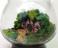 The hobbit terrarium