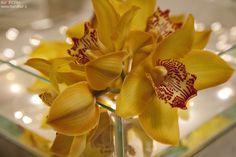 Centrotavola con orchidea