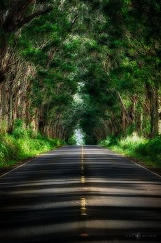 Drive through the Tunnel of Trees on Kauai (Stop in the center of the road for a spectacular picture like this one—just make sure there's no traffic!)