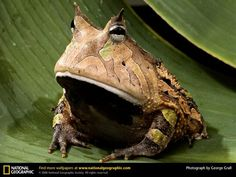 All Glory! He exists!  omg! its hypno-toad