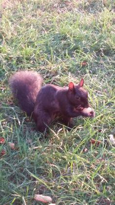 Evil squirrel look