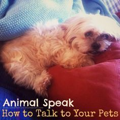 Talking to your pets is easy. You probably already know how!