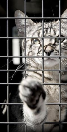 Just ONE  CLICK  helps fight ANIMAL CRUELTY. DO IT  !!  CLICK
