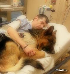 The dedication of a PTSD Service Dog, and the comfort for a veteran.  Please help us fund Atlas the Wonderdog.