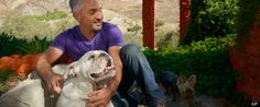 SEROXAT SUFFERERS - STAND UP AND BE COUNTED: Dear Cesar, My Dog Has ADHD