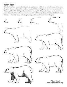 Bear (Polar) Drawing Lesson