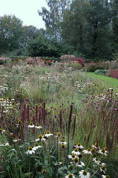With the publication of Piet's latest book in collaboration with Noel Kingsbury, Planting: A New Perspective, I thought it worth re-visiting a 3 Part Interview about Piet that I wrote in Prairie Planting, Prairie Garden, Meadow Garden, Dream Garden, Planting Plan, Big Garden, Back Gardens, Outdoor Gardens, Landscape Architecture