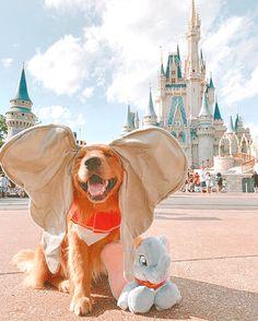 Cute Baby Dogs, Super Cute Puppies, Super Cute Animals, Cute Dogs And Puppies, Cute Little Animals, Cute Funny Animals, Doggies, Baby Animals Pictures, Cute Animal Photos