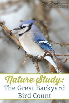 Nature Study: The Great Backyard Bird Count - Year Round Homeschooling Great Backyard Bird Count, Backyard Birds, Nature Activities, Science Activities, Free Homeschool Curriculum, Homeschooling, Citizen Science, Nature Sketch, Nature Journal