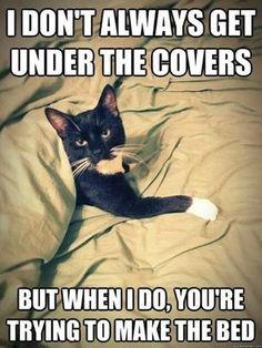ฅ=^..^=ฅ HERE KITTY KITTY