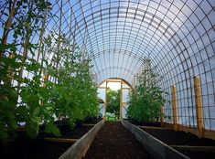 Bygga ett Tunnelväxthus av Sofie Persson | PANKPRAKTIKAN Tunnel Greenhouse, Backyard Greenhouse, Greenhouse Plans, Hydroponic Growing, Growing Plants, Growing Vegetables, Homemade Greenhouse, Vertical Vegetable Gardens, Cinder Block Garden