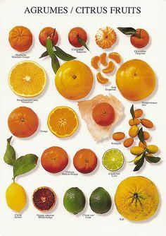 I try to eat citrus fruit as a snack. It's good for your metabolism! L'art Du Fruit, Fruit Art, Fresh Fruit, Fruit Water, Fruit Salad, Photo Fruit, Fruit Picture, Fruits And Vegetables, Citrus Fruits