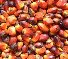 Presco and Okomu revenues rise 50% on the back of CBN's 41 item ban: Presco and Okomu Plc, two of Nigeria's leading producers of palm oil…