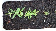 Pflanze Nummer 2, wächst langsam, aber ivh hoffe das ich irgendwann noch herausfinde was es ist. Pflanze Nummer 1 hat die Hitze nicht vertragen und lebt leider nicht mehr. Plants, One Day, Flowers, Plant, Planets