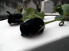 imagen de Luto | 07 de abril de 2011.