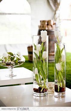 Witte tulpen, lekker fris