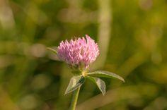 gently pink by Graziella Serra Art & Photo on 500px