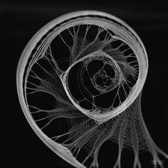 Serjan_Burlak-BIOGENIC-Geometry-of-Intelligence_15.jpg