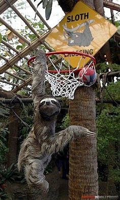 @Brooke Wentland I want this sloth!!!!!!!!!!!!!!!!!!!!!!!!!!!!!!!!!!!!!!!1