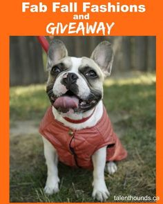 Talent Hounds Update Your Dog's Fall Wardrobe With Our C$25 Visa Gift Card Giveaway!