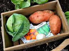 Fresh Eggs Daily®: My Top Twelve Plants to Grow for Chickens