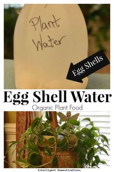 How to Make Eggshell Water For Houseplants How to make egg shell water organic plant food for your house plants. Eggshell water for plants. Reuse egg shells to make organic water for your plants. Organic Water, Organic Plants, Nature Plants, Cool Plants, Diy Hacks, Homemade Plant Food, How To Make Eggs, Fertilizer For Plants, Homemade Plant Fertilizer