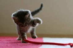 cute kitten 5 Daily Awww: Cats keep us entertained without even trying (33 photos)