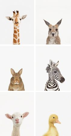 little-darlings-animal-print-shop