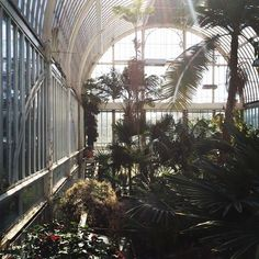 The Palm House at The Garden Society of Gothenburg