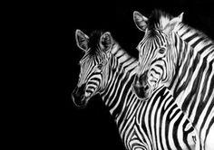 Zebra Family by Karl Hamilton-Cox Animal Drawings, My Drawings, Drawing Animals, Zebra Art, Charcoal Drawing, African Animals, Zebras, Paintings For Sale, Saatchi Art
