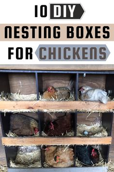 Nesting boxes are a crucial part in the chicken keeping process. They are that important piece that helps you pick up eggs easier and handle your broody hens. #nestingboxes #chickens Fancy Chickens, Types Of Chickens, Raising Backyard Chickens, Urban Chickens, Keeping Chickens, Chickens And Roosters, Backyard Coop, Backyard Chicken Coops, Diy Chicken Coop