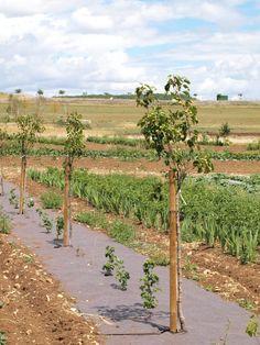 Forêt-jardin : l'agroforesterie 2.0 verger-maraicher
