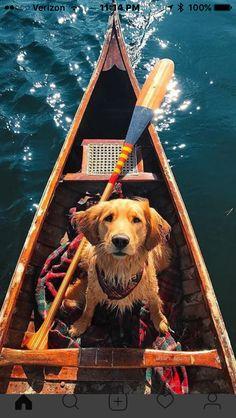 Golden Retriever in a canoe! Cute Puppies, Dogs And Puppies, Cute Dogs, Doggies, Animals And Pets, Baby Animals, Cute Animals, Funny Animals, Animals Images