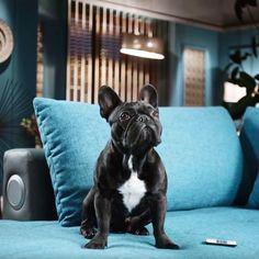 Kennt ihr schon Oskar, die knuffige Bulldogge aus dem neuen OTTO Werbespot? Jetzt auf ajoure.de entdecken!  #anzeige #otto #was1festival #ajoure