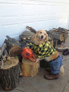 Haha. Funny and super cute dog