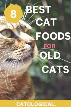 How to Choose the Best Wellness Cat Food? Kitten Treats, Kitten Food, Kitten Care, Dog Treats, Cat Love Quotes, Cat Toilet Training, Cat Diet, Best Cat Food, What Cat