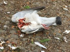 I would love to know what predator straight up decapitated this bird and left the body to rot....